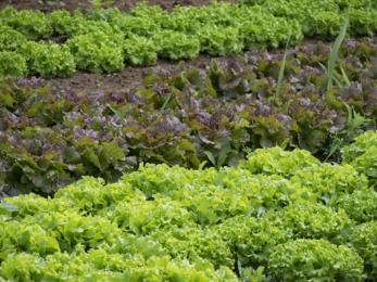 orto casa coltivare