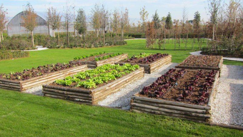 Con YouFarmer si può adottare un orto e imparare a coltivarlo 2