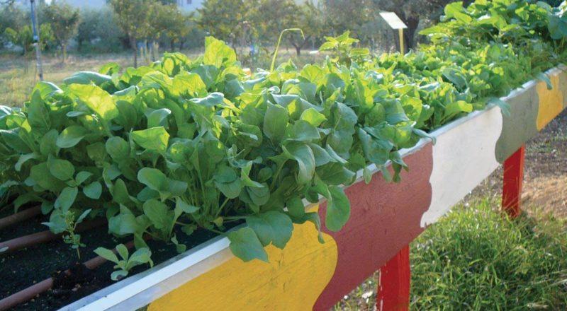 Con YouFarmer si può adottare un orto e imparare a coltivarlo 1