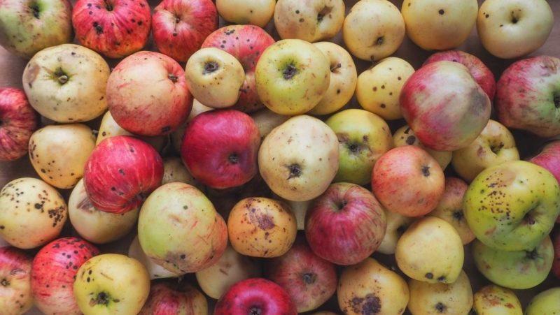 In Europa si scartano 50 milioni di tonnellate di frutta e verdura all'anno 2