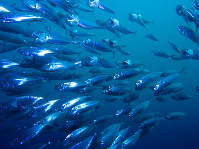 Con BlueNalu, prodotti ittici dalle cellule di pesce