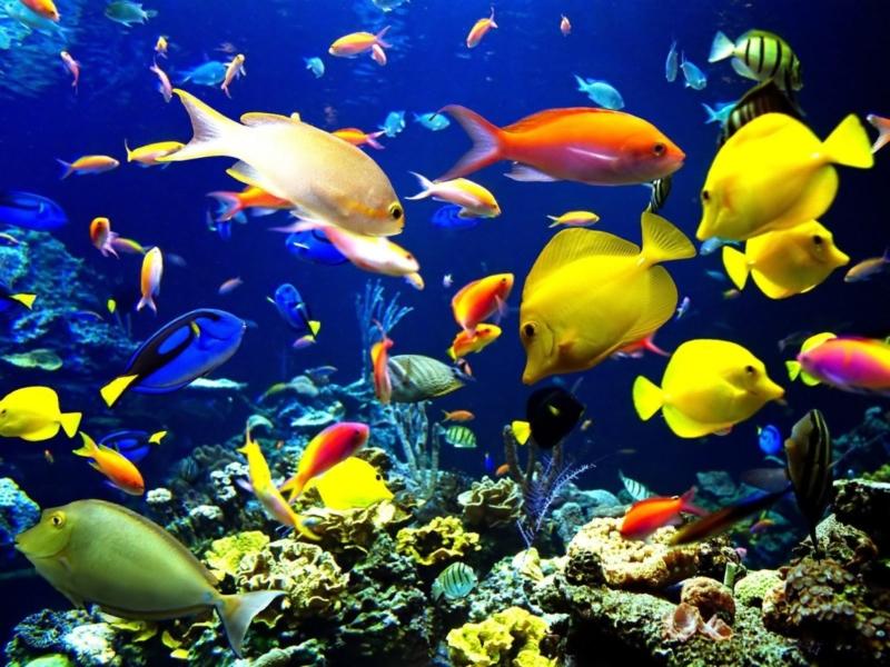 Con BlueNalu, prodotti ittici dalle cellule di pesce 1