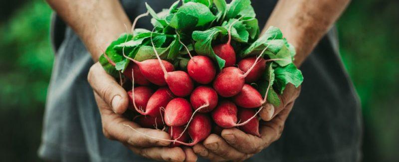 Il consumo dei prodotti biologici sta vivendo una forte crescita 1