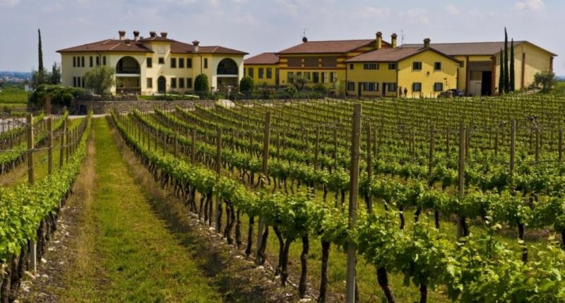 Sempre più giovani italiani si dedicano all'agricoltura 3