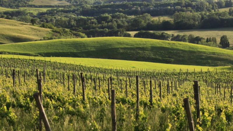 Sempre più giovani italiani si dedicano all'agricoltura 2