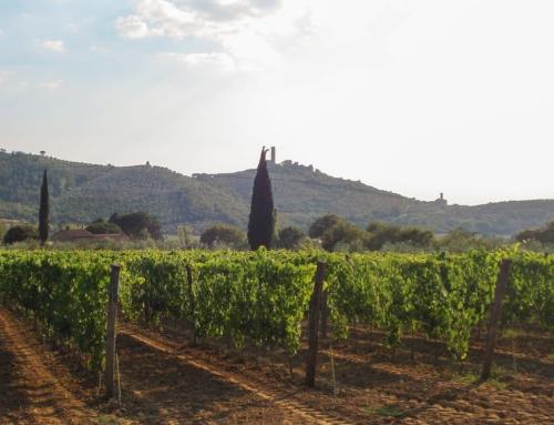 Sempre più giovani italiani si dedicano all'agricoltura