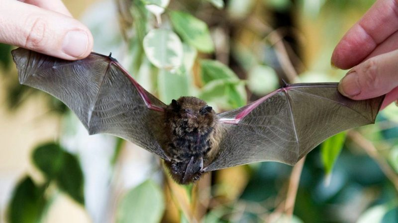 I pipistrelli di YES!BAT per un'agricoltura sostenibile 1