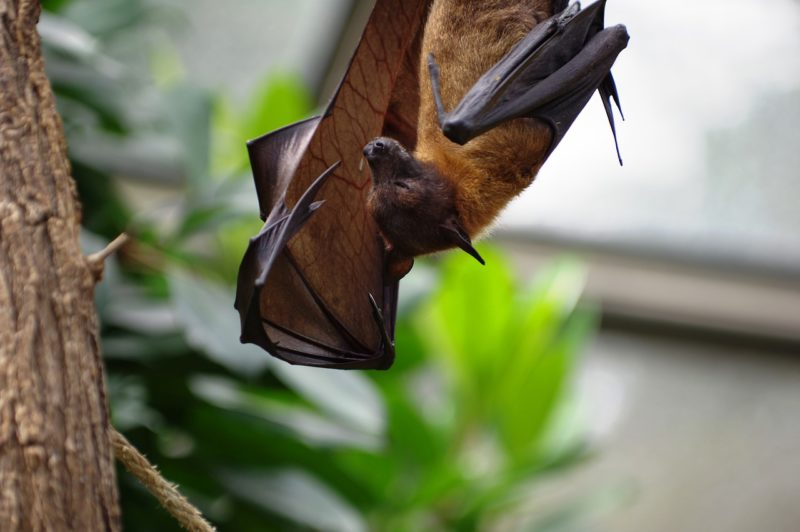 I pipistrelli di YES!BAT per un'agricoltura sostenibile