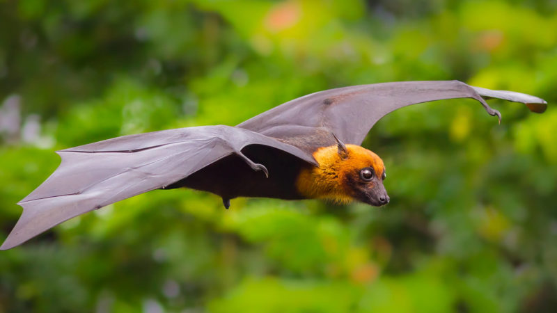 I pipistrelli di YES!BAT per un'agricoltura sostenibile 2