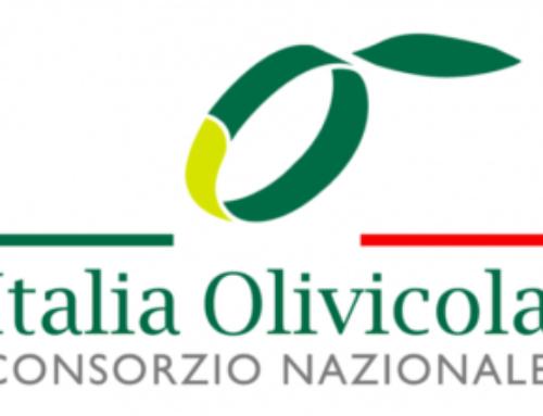 Nasce Italia Olivicola per la difesa dell'olio Made in Italy