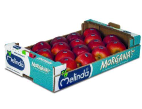 Ecco Morgana, la nuova mela di Melinda