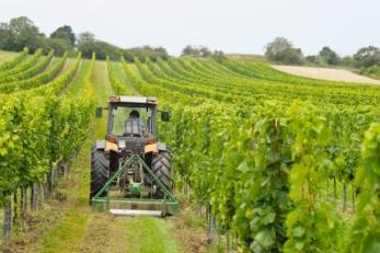 Italiani Figlio Agricoltore Vigna