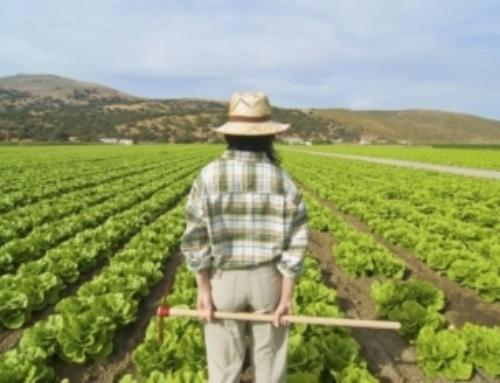 Otto italiani su dieci sarebbero contenti con un figlio agricoltore