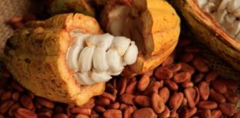 Fava di Cacao Sud America