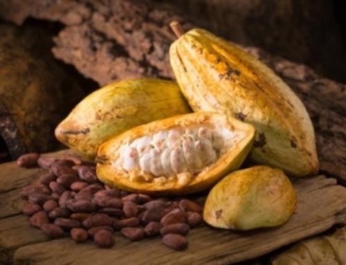 Il cacao fu coltivato per la prima volta in Sud America 5.300 anni fa