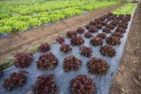 carta dei valori agricoltura bio