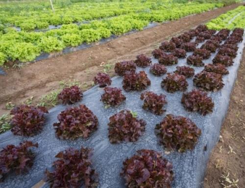 Arriva la Carta dei Valori a tutela del settore biologico