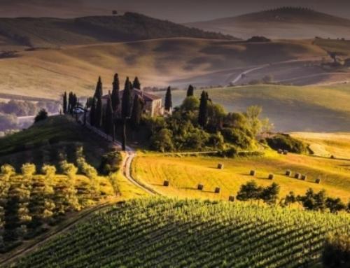 Su Wineowine trovi solo ottimo vino di qualità