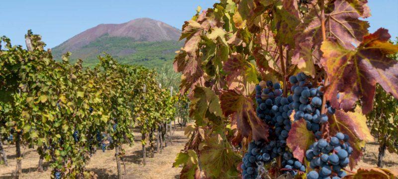 Cantina del Vesuvio: tutto il carattere del vulcano in un bicchiere 1