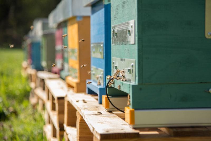 Ferrero ha adottato 10 alveari e 600mila api con la startup 3Bee