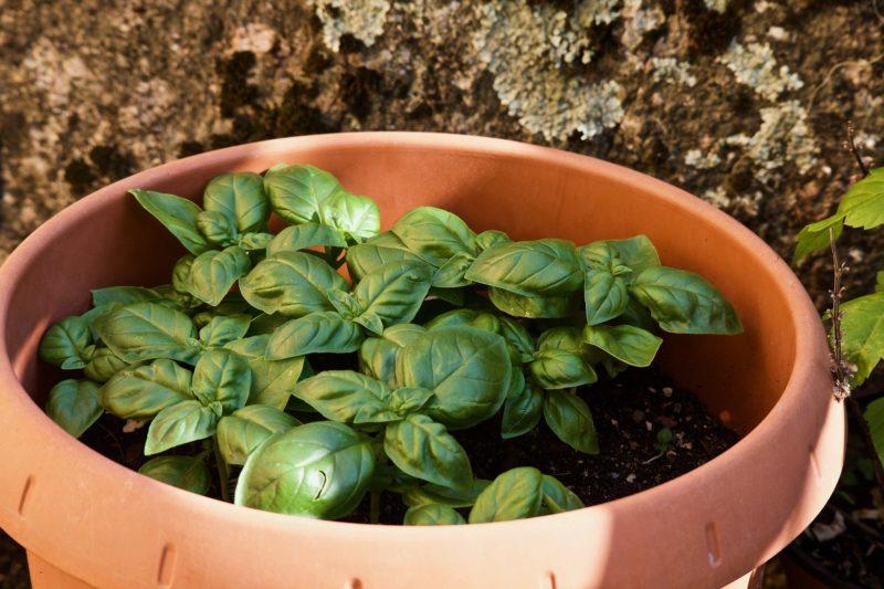 Una nuova passione per gli italiani: è boom di orti in terrazzo 1