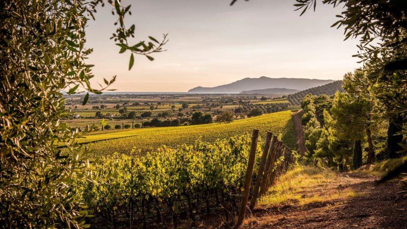 Monteverro, un vino toscano con carattere internazionale 1