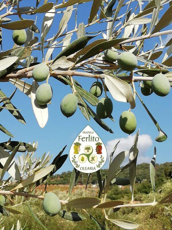 I dettagli che fanno la differenza in cucina: l'olio extravergine di oliva dell'Olearia Ferlito 2