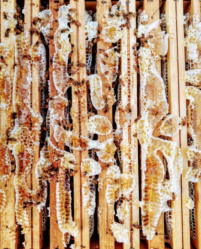 I sapori contrastanti della Puglia nel miele La Pecheronza 1