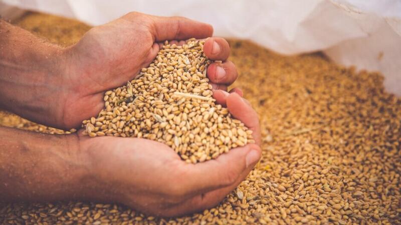 Azienda agricola Milonia: terra, grano, passione nel cuore della Basilicata 1