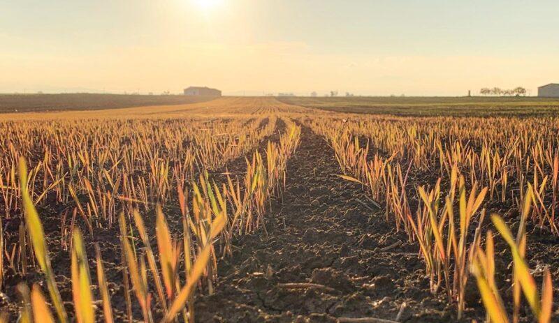 Azienda agricola Milonia: terra, grano, passione nel cuore della Basilicata