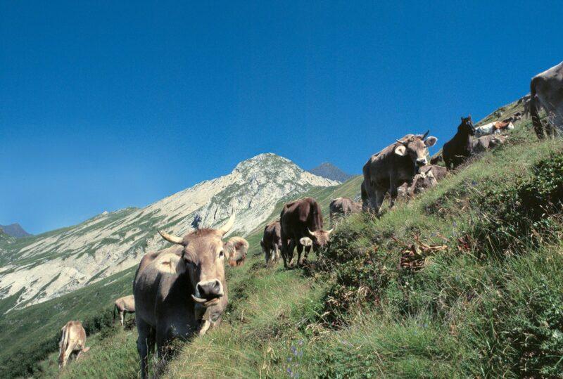 Dall'Alta Val Brembana la Latteria di Branzi custode dei formaggi della tradizione bergamasca 1