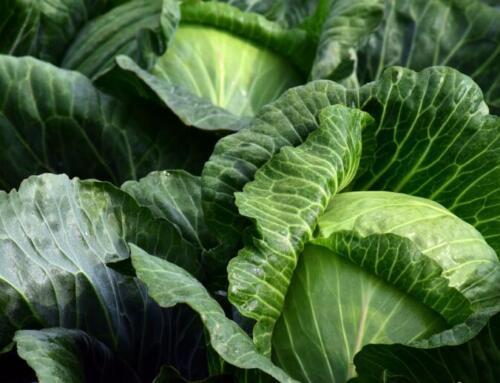 Aumenta la richiesta di cibo salutare e sicuro con il Covid