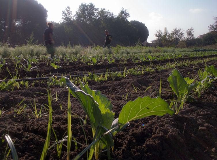 Fattoria sociale Fuori di zucca: coltivazioni biologiche per il sociale 1