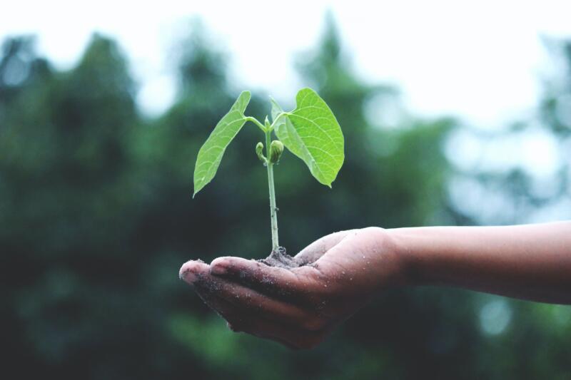 Il futuro del nostro pianeta è in mano alla sostenibilità agroalimentare? 2