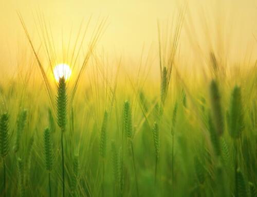 Il futuro del nostro pianeta è in mano alla sostenibilità agroalimentare?