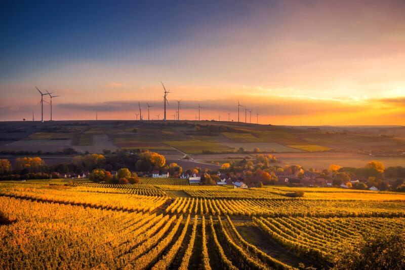 Il futuro del nostro pianeta è in mano alla sostenibilità agroalimentare? 3