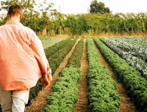 Riscoprire la fiducia attraverso il cibo, intervista a Cà di Viazadùr Farmhouse
