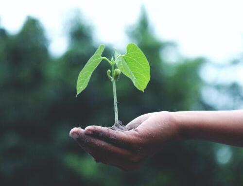 Il pack alimentare del futuro: sostenibilità, innovazione e sicurezza