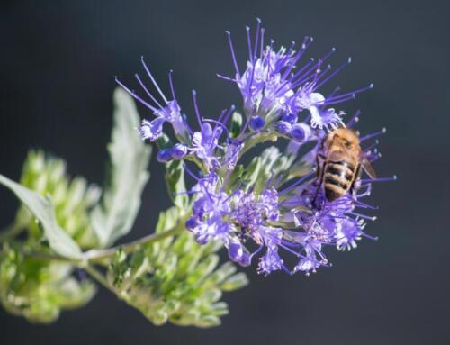 Beetourism: il turismo del miele diventa un trend per il 2021