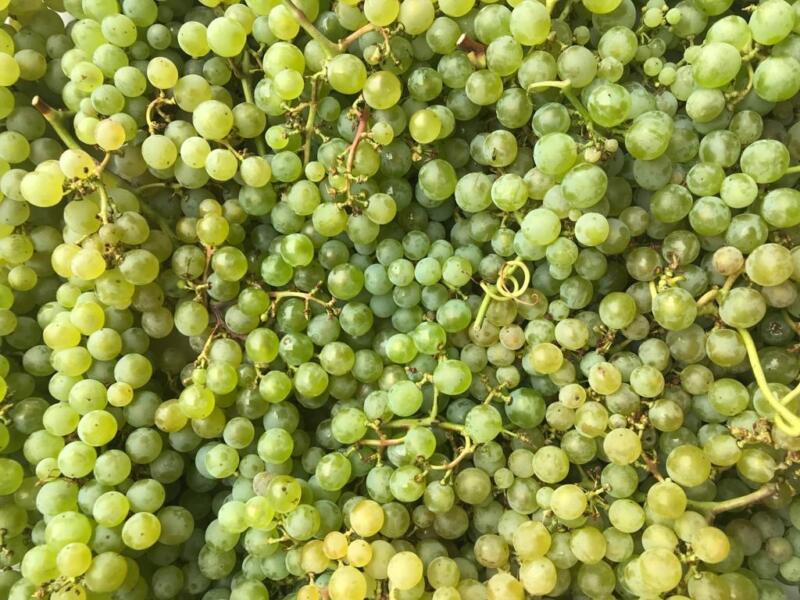sostenibilità vino