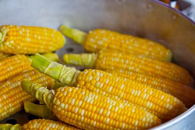 mais coltivazione cereali