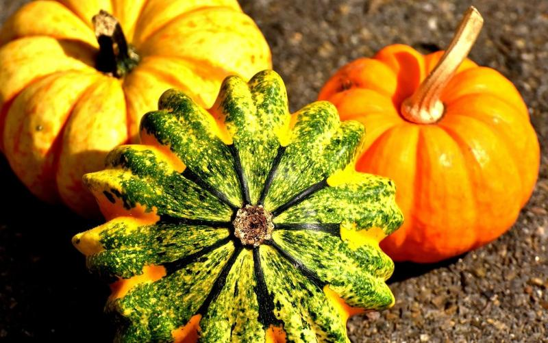 La zucca e le sue 3 varietà più conosciute: curiosità e ricette